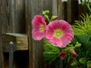 choisir une clôture de jardin