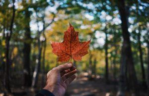 agence de SEO canadienne pour site français