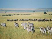Parc à visiter au Kenya
