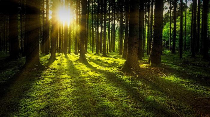 luminothérapie et dépression