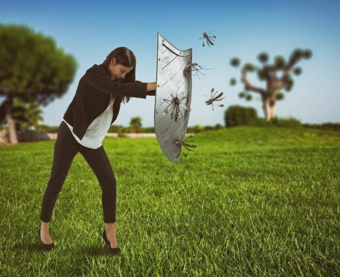moustiques aedes