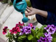 plante pour jardin