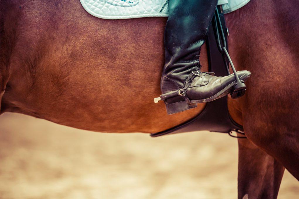 équitation accessoires