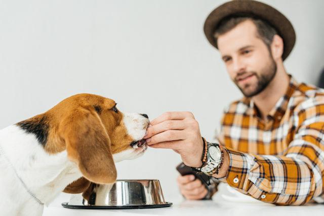 aliments chien
