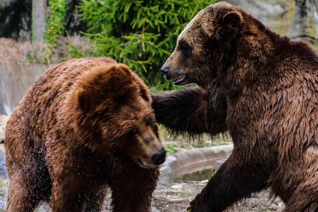 melles pays de l'ours