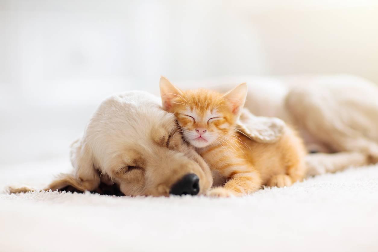 assurance animal de compagnie