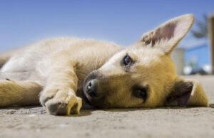 Substances toxiques pour les chiens